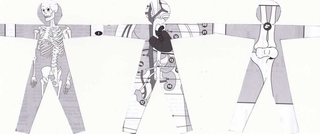 ribambelle anatomique 2